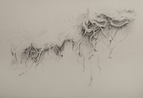 roots, 2018<br />charcoal drawing, 47x69 cm